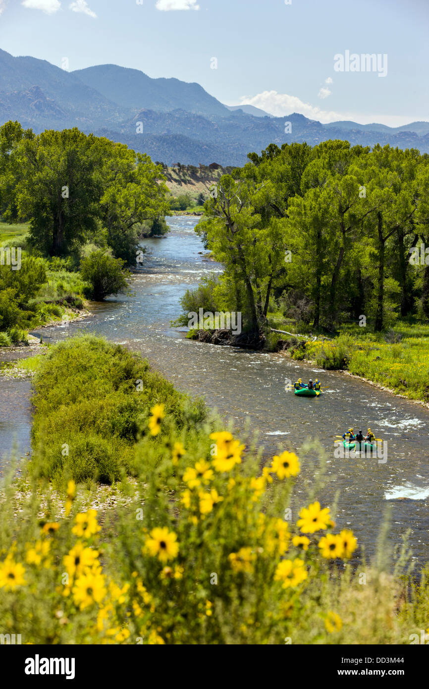 Rafters float past wild sunflowers along the Arkansas River near Buena Vista, Chaffee County, Colorado, USA - Stock Image