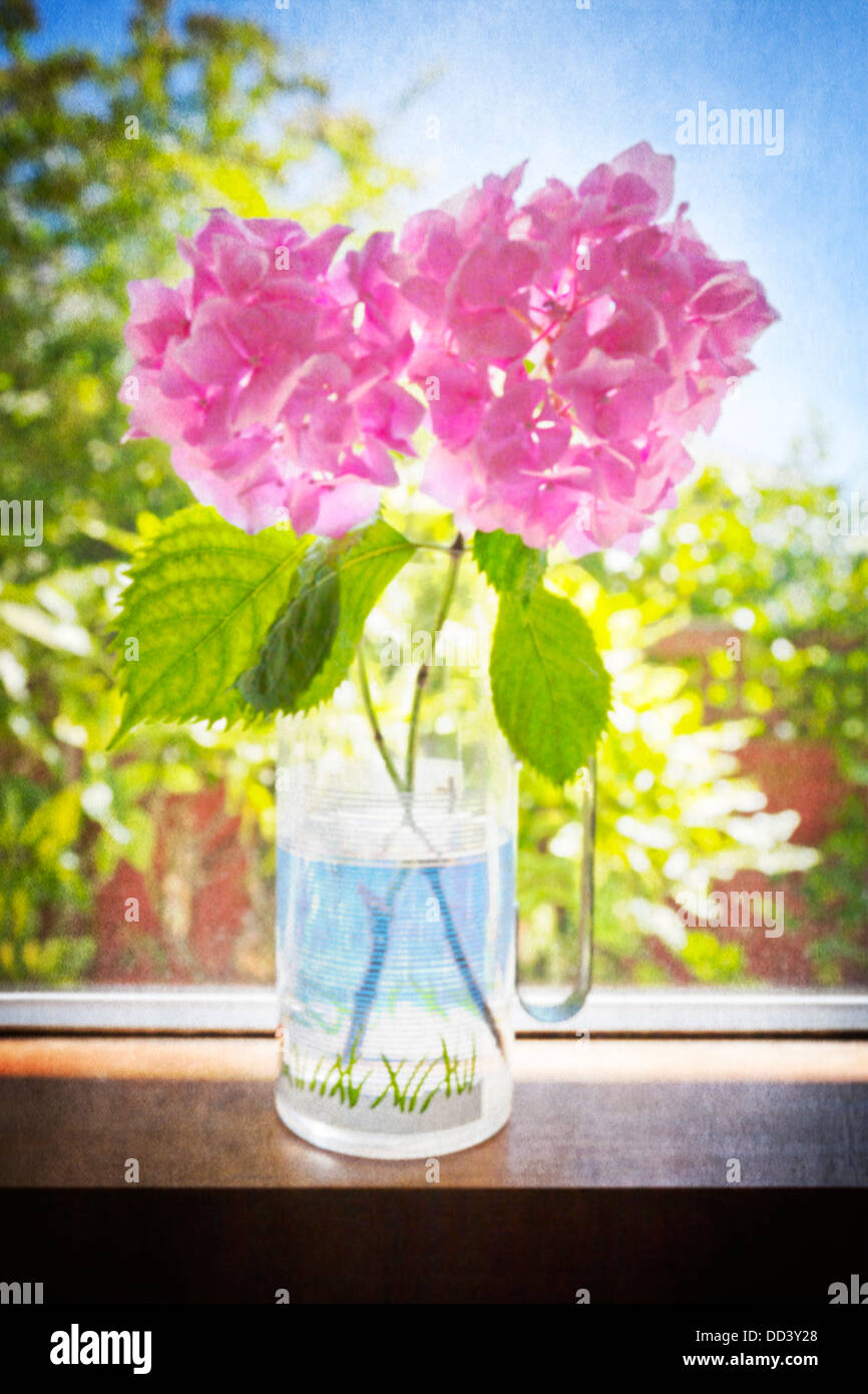 A vase of pink hydrangea flowers on a windowsill with texture. - Stock Image
