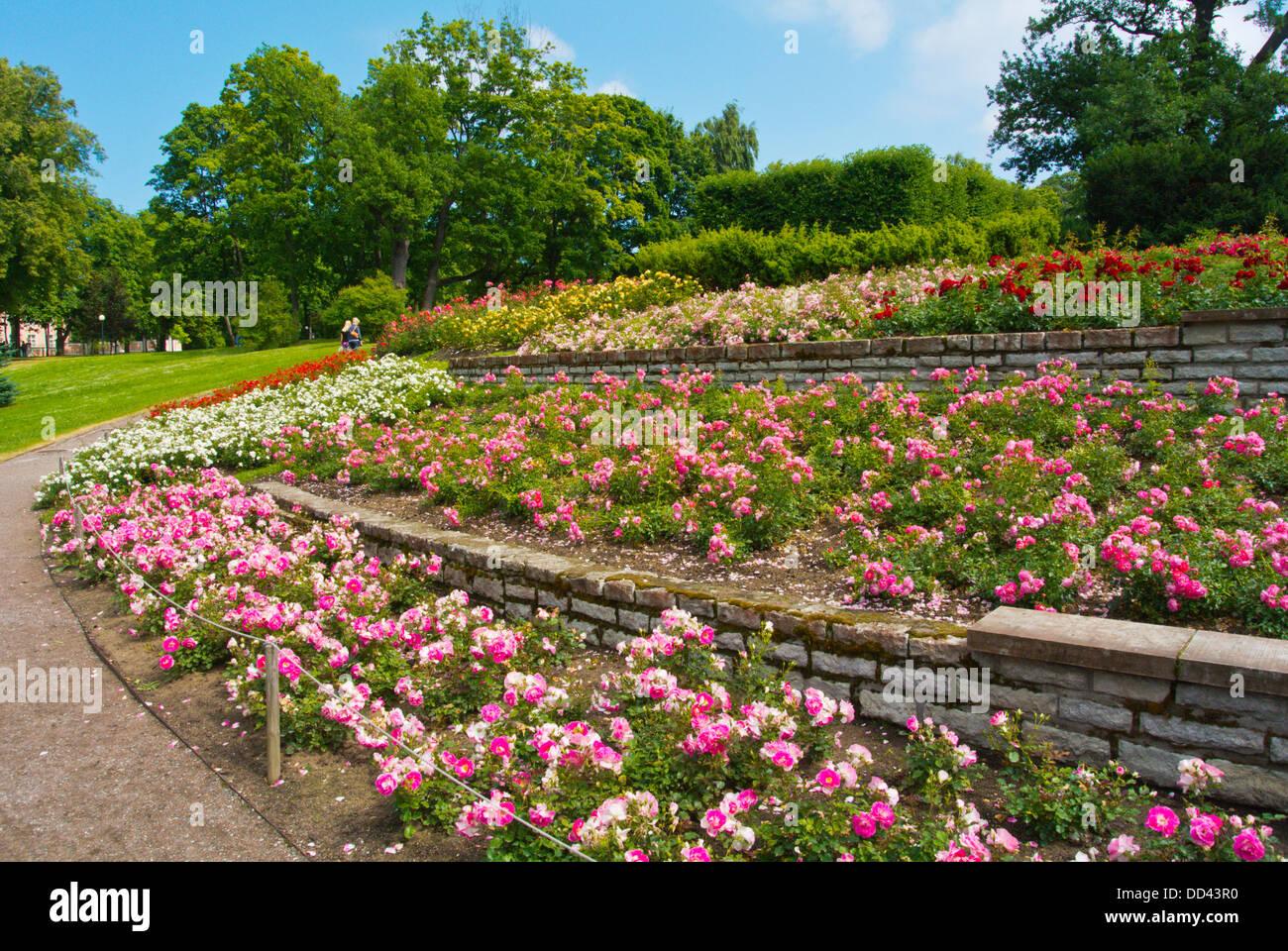 Country Gardens Summer Rose Stock Photos & Country Gardens Summer ...