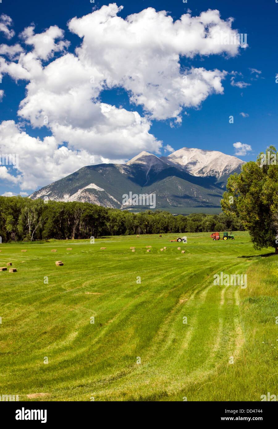 Farm fields and Collegiate Peaks, Rocky Mountains, beyond. Near Buena Vista, Colorado, USA - Stock Image