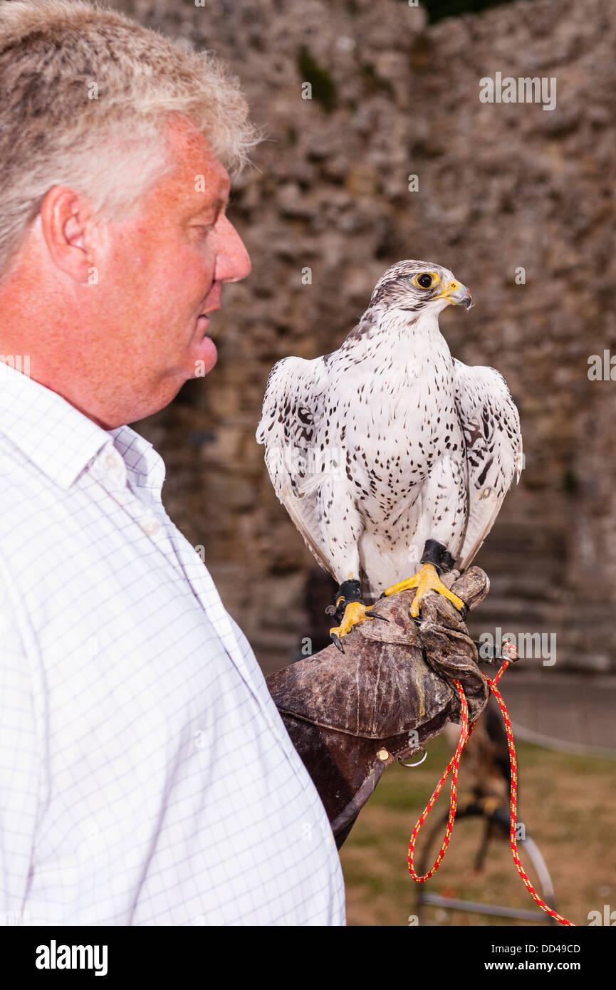 A Gyrfalcon Gyr falcon (Falco rusticolus) at the Falconry display at Beaulieu , Hampshire , England , Britain , - Stock Image