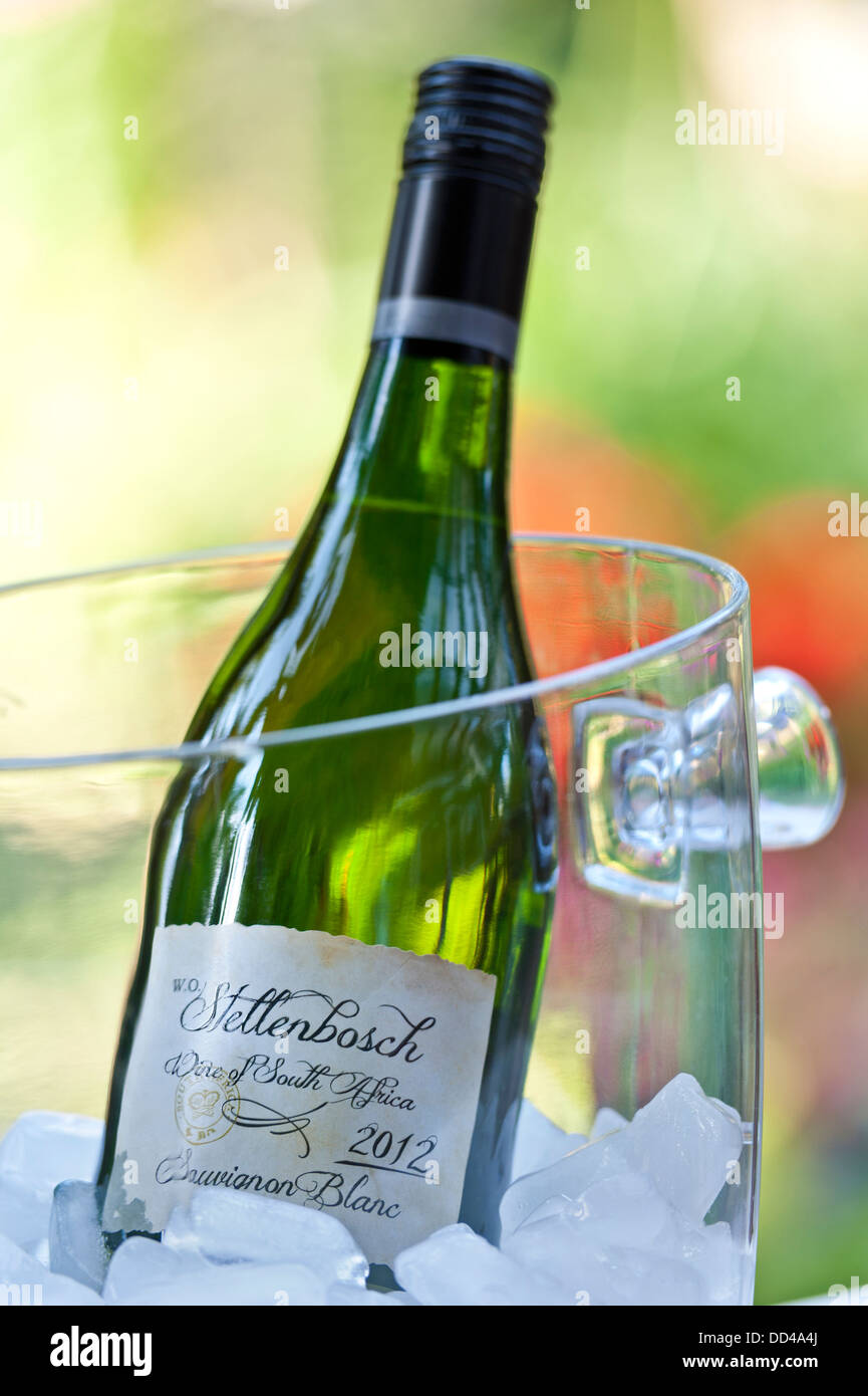 Stellenbosch Sauvignon Blanc 2012 South African wine bottle in ice cooler in sunny alfresco garden situation - Stock Image