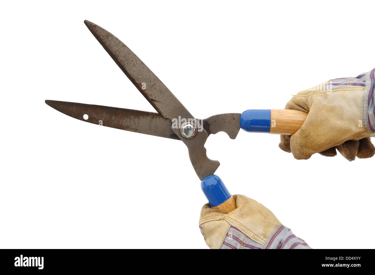 Gardener Holding a Hedge Trimmer Isolated On White - Stock Image