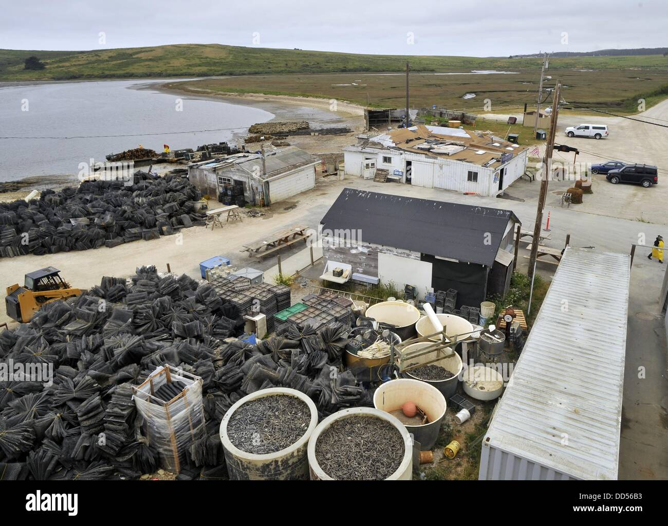 May 23, 2013 - Inverness, California, USA - A general overview of the Drakes Bay Oyster Farm on May 09, 2013 in - Stock Image