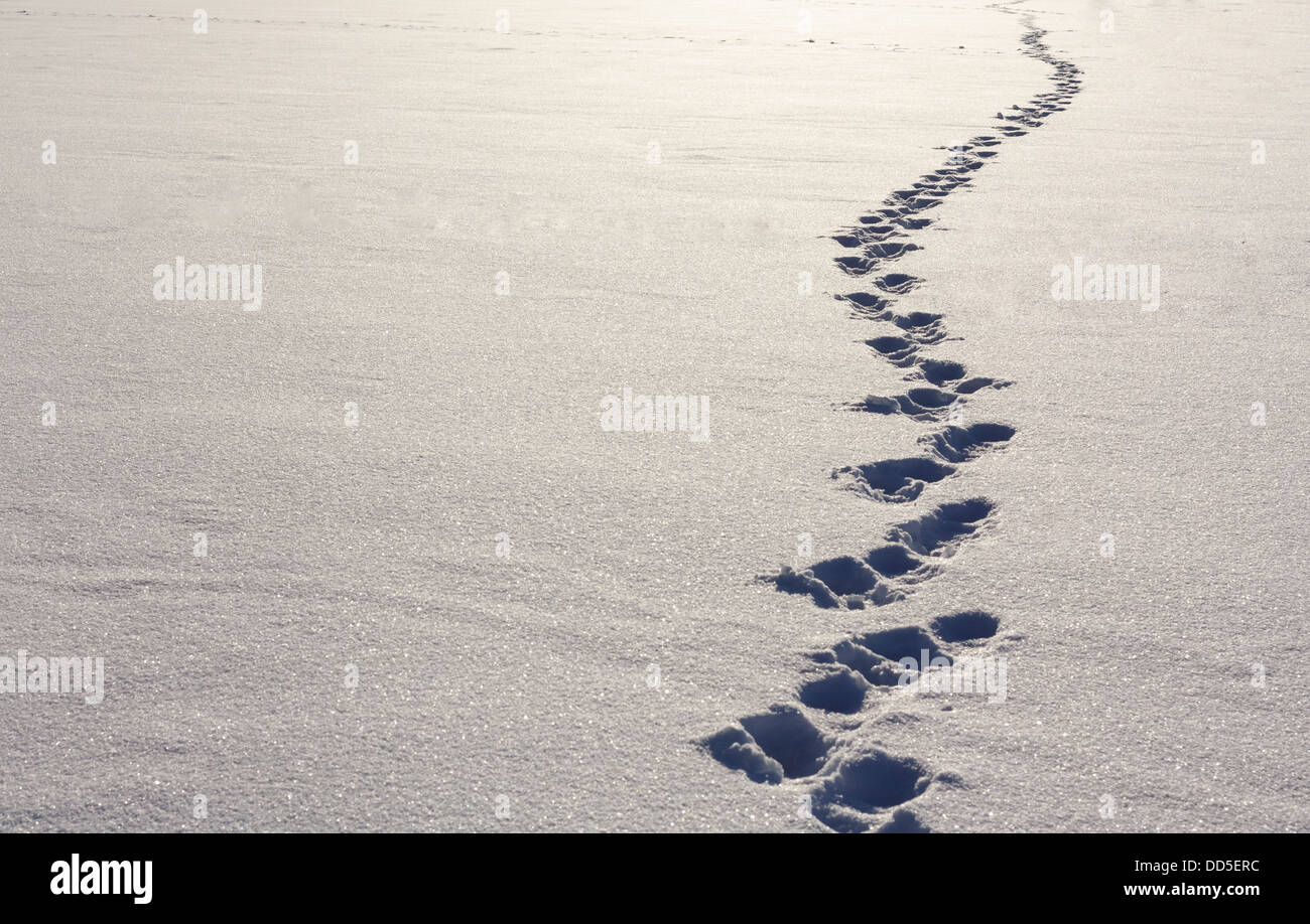 Human Footprints In Deep Snow On Sunny Day - Stock Image