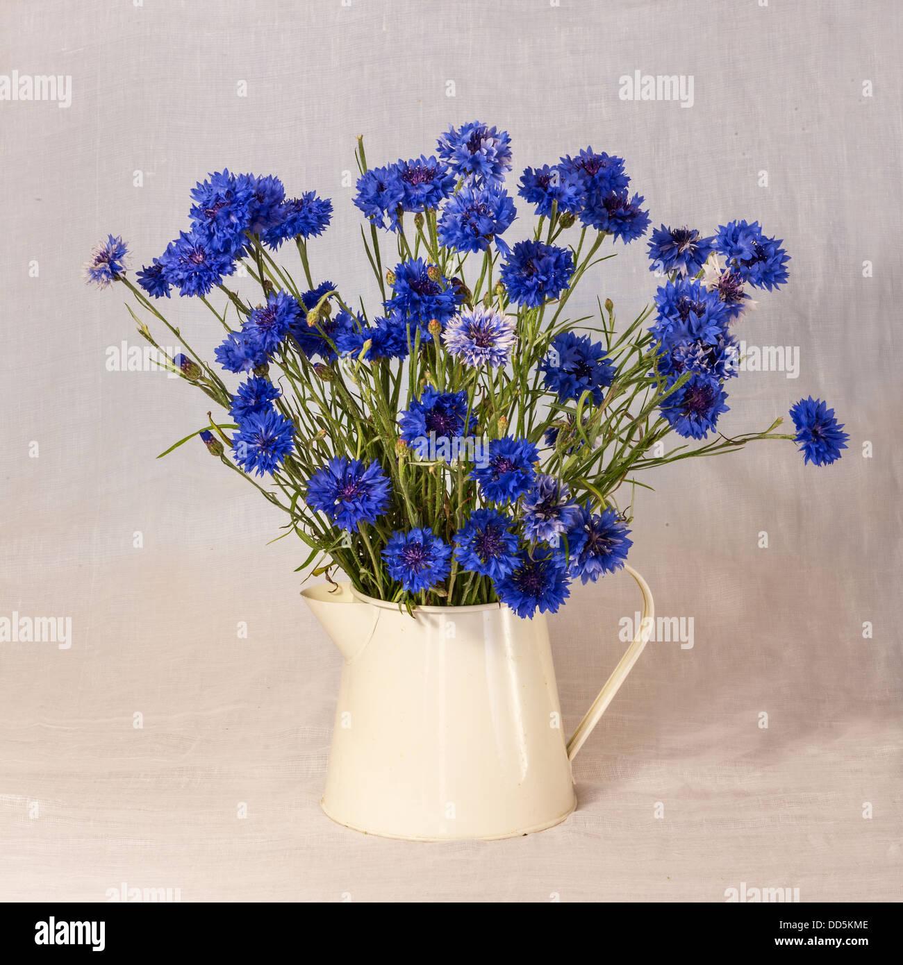 Jug of Cornflowers Stock Photo