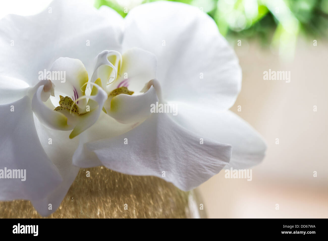 white Orchid Decoration - Stock Image
