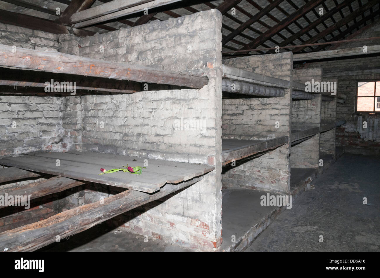 Where inmates slept in Auschwitz concentration camp. - Stock Image