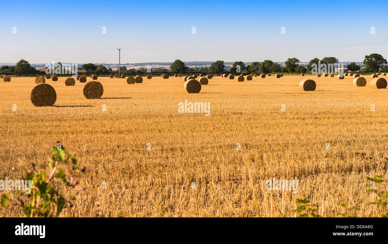 Hay bails in a field in Pickering, North Yorkshire, UK - Stock Image