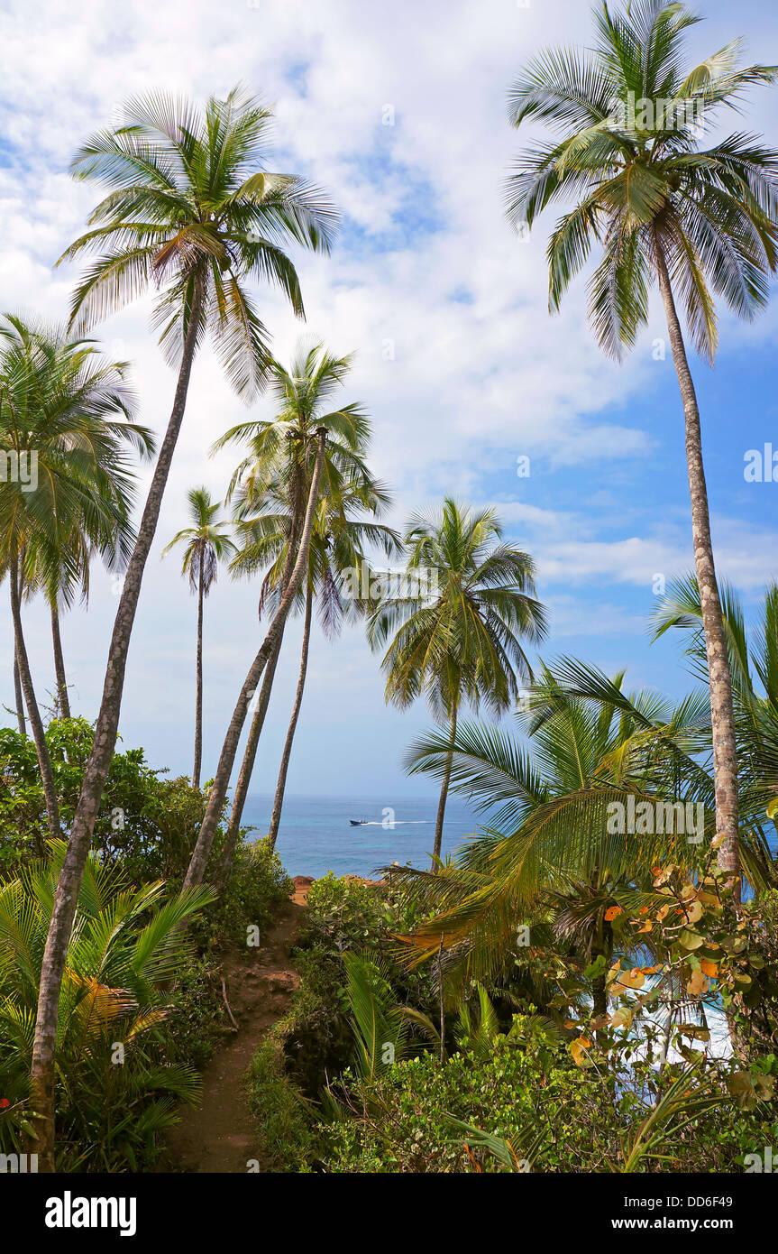 Coastal footpath under coconut trees with Caribbean sea in background, Manzanillo, Costa Rica - Stock Image