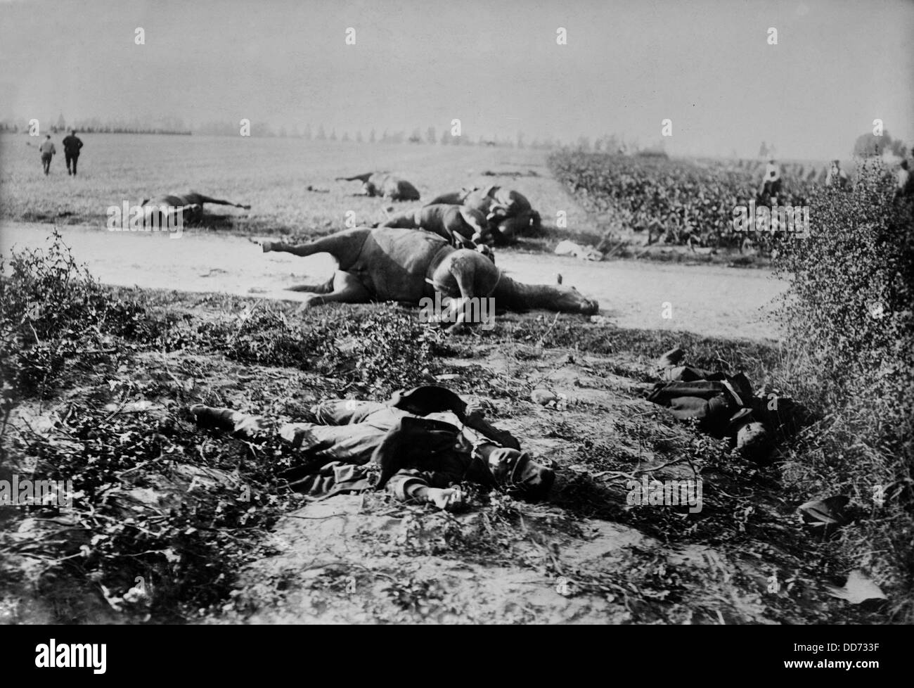 World War 1. Dead soldiers and horses in a field after the Battle of Haelen which was fought by the German and Belgian - Stock Image