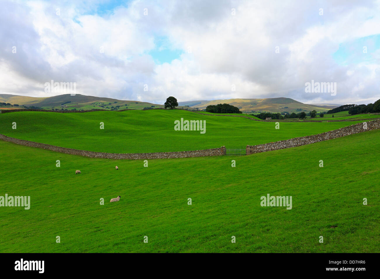 Fields towards Dodd Fell and Widdale Fell near Hawes in Wensleydale, North Yorkshire, Yorkshire Dales National Park, - Stock Image
