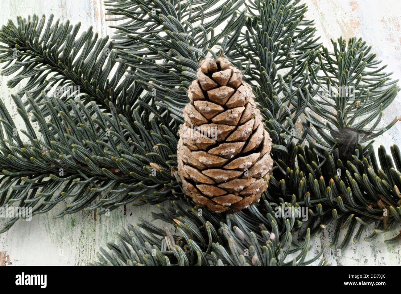 Pine branch and pine cones - Stock Image