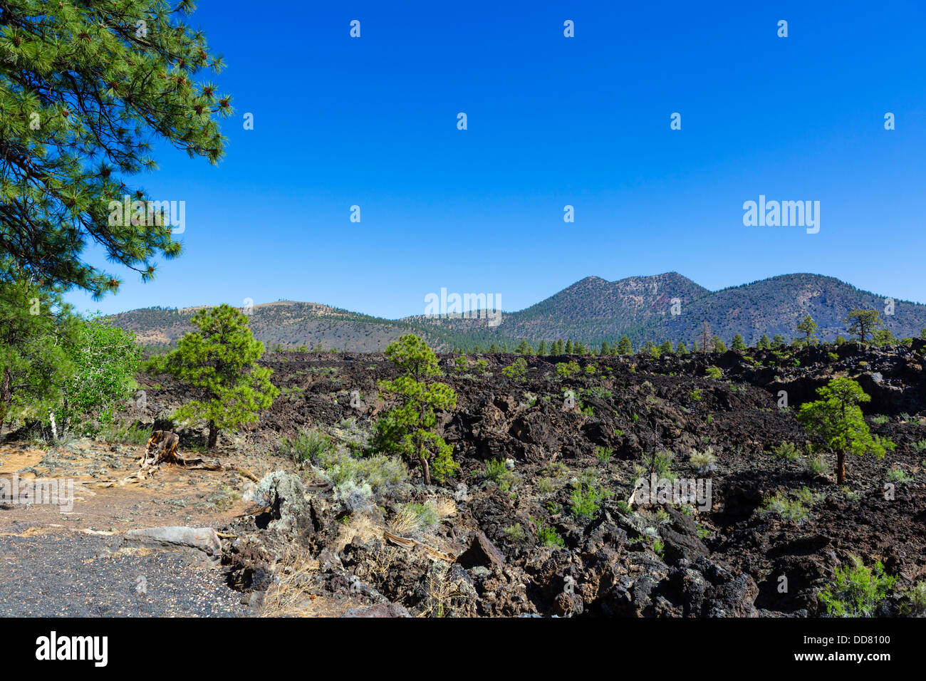 Viewpoint overlooking the Bonito Lava Flow, Sunset Crater Volcano National Monument, near Flagstaff, Arizona, USA - Stock Image