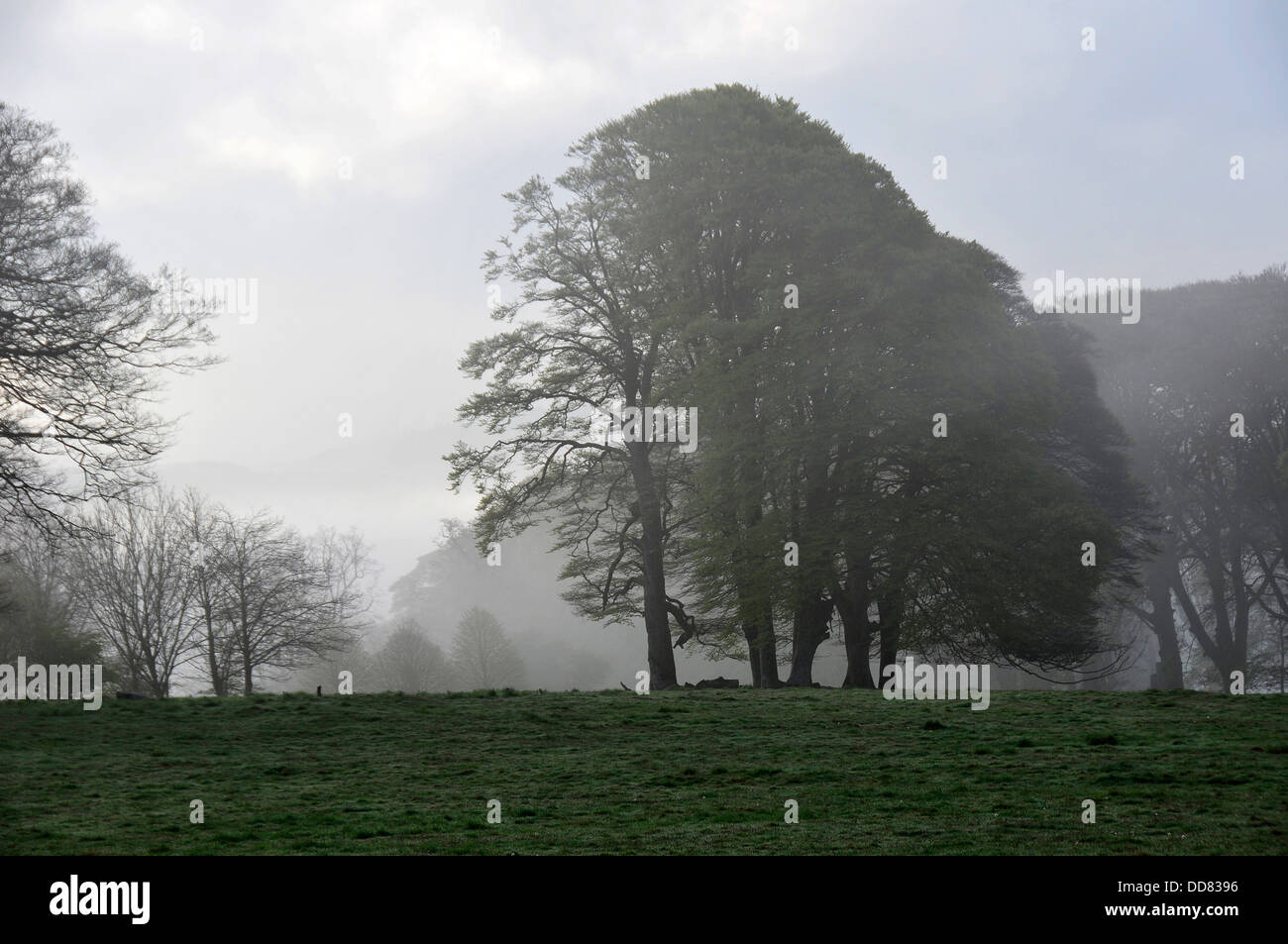 Early morning mist over the parkland at Lanhydrock estate in Cornwall. - Stock Image