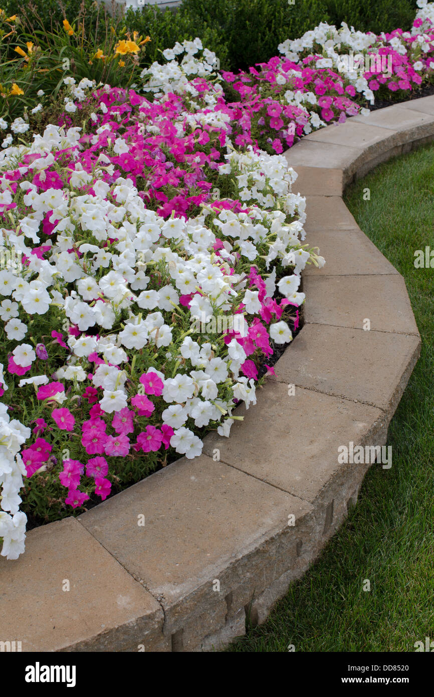 Pink And White Petunias On The Brick Flower Bed Stock Photo