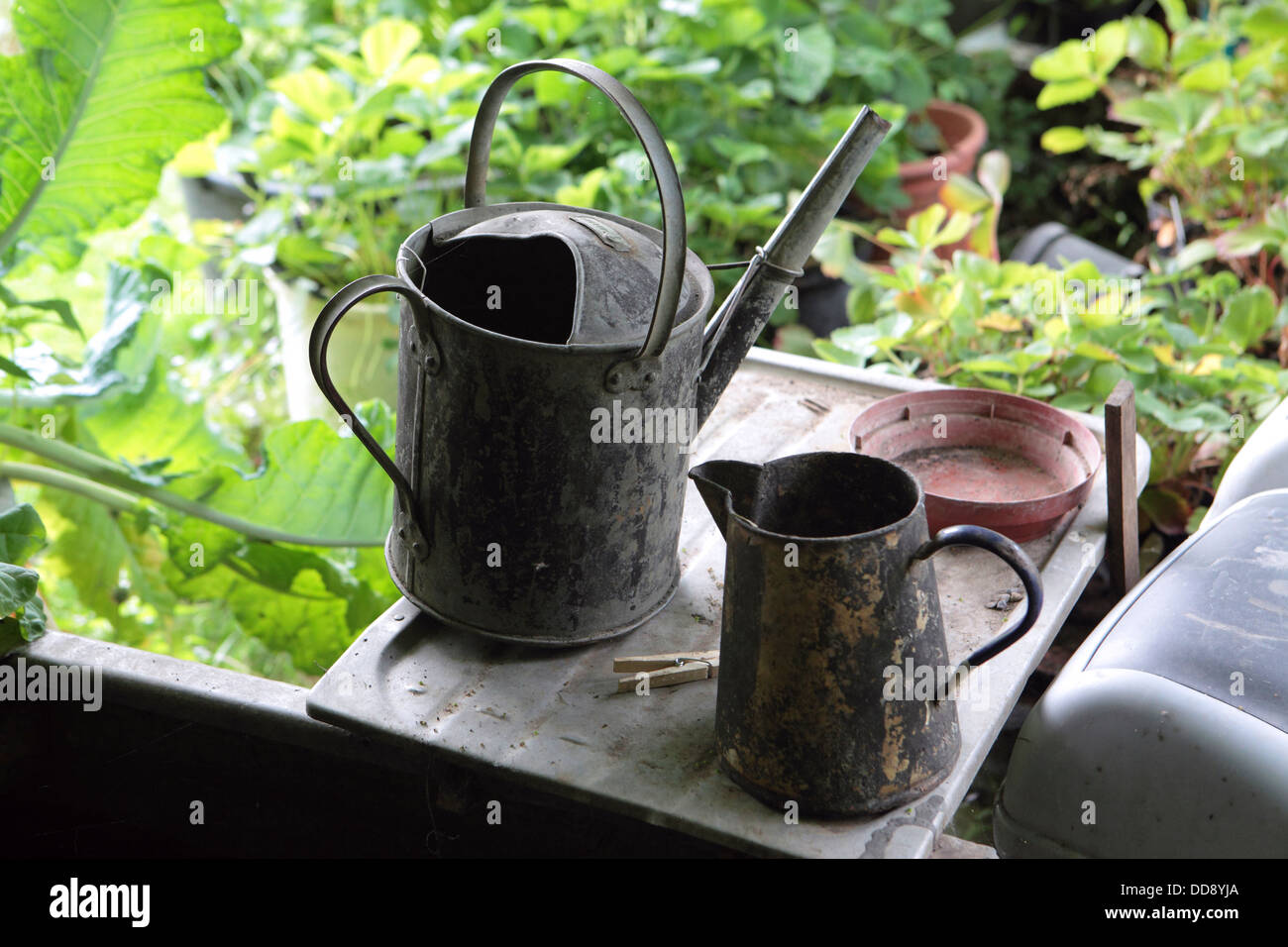 Photograph from the organic potting shed, gardener English garden, UK. Galvanized metal watering can and jug. - Stock Image