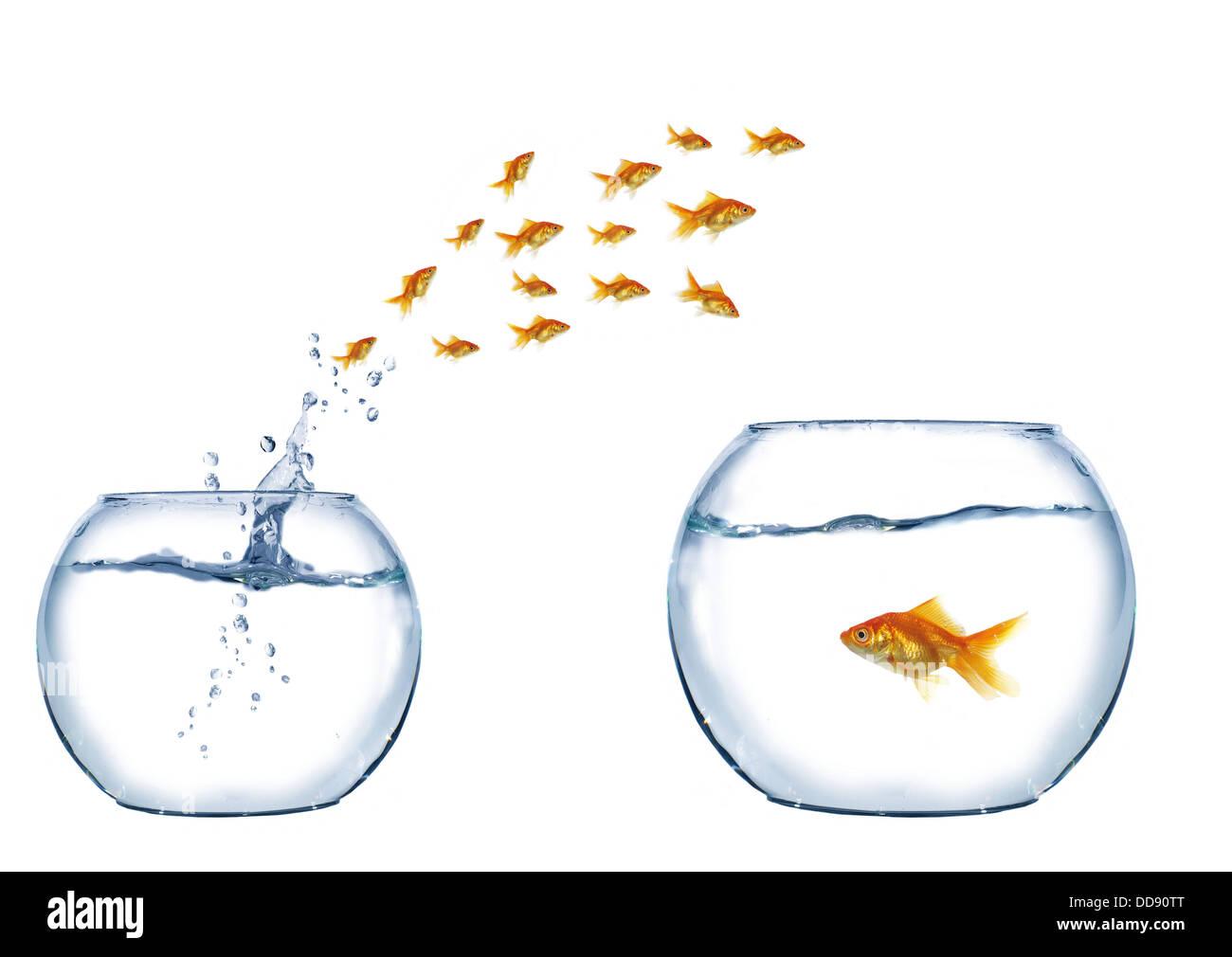 Gold Jump Over To Larger Aquarium Fish Stock Photo 59819896 Alamy