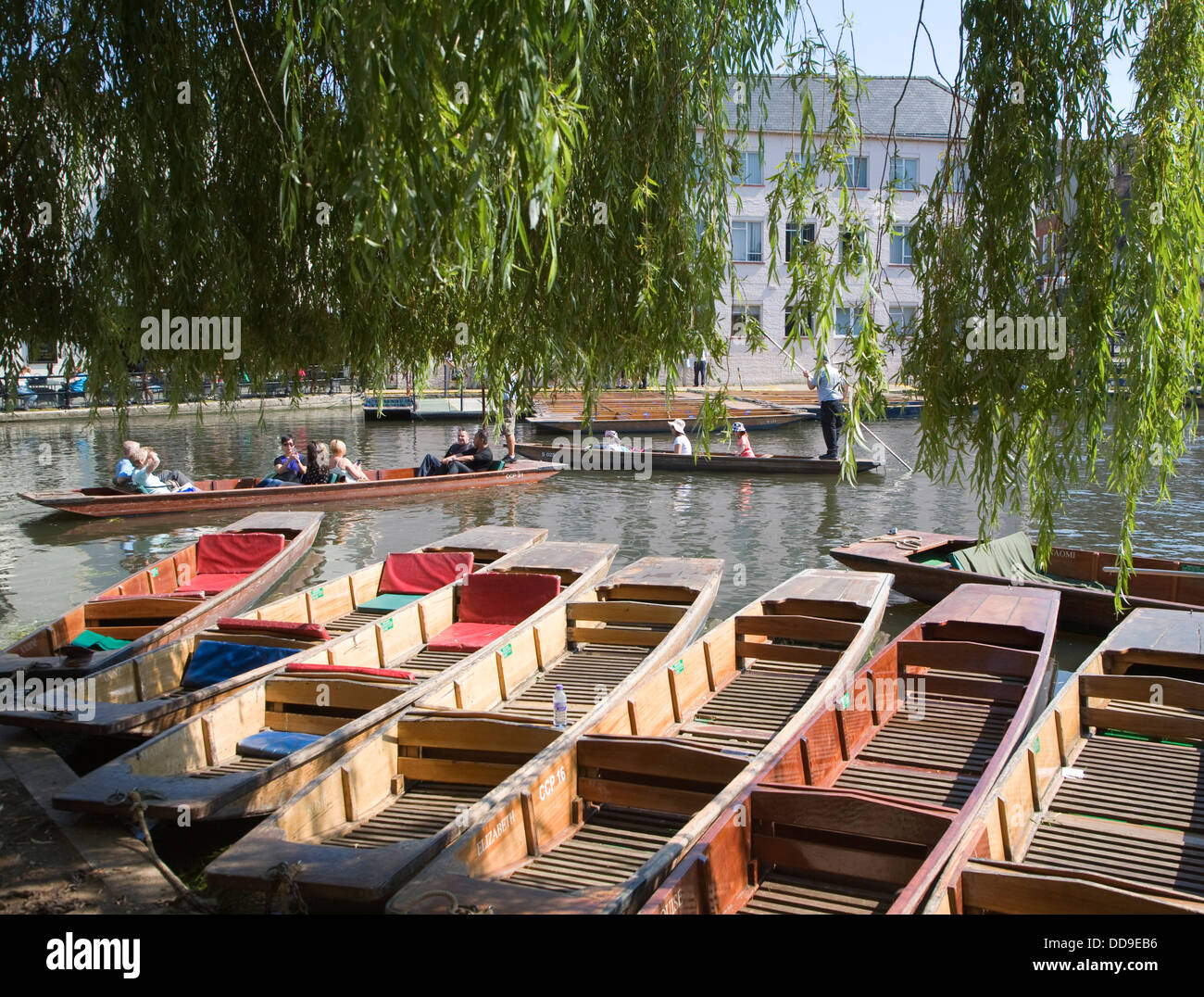 Punts willow tree leaves River Cam Cambridge England - Stock Image