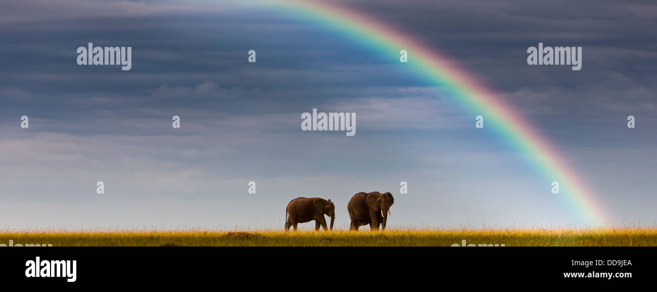 Africa,Kenya, View of African elephants in Masai Mara National Park - Stock Image
