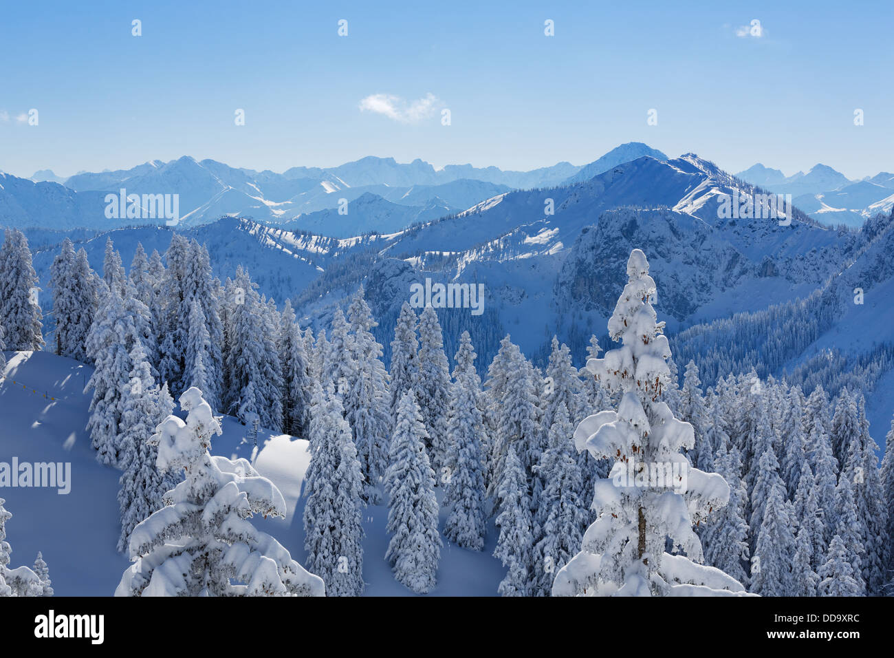 Germany, Bavaria, Snow covered spruces at Tegelberg Mountain - Stock Image