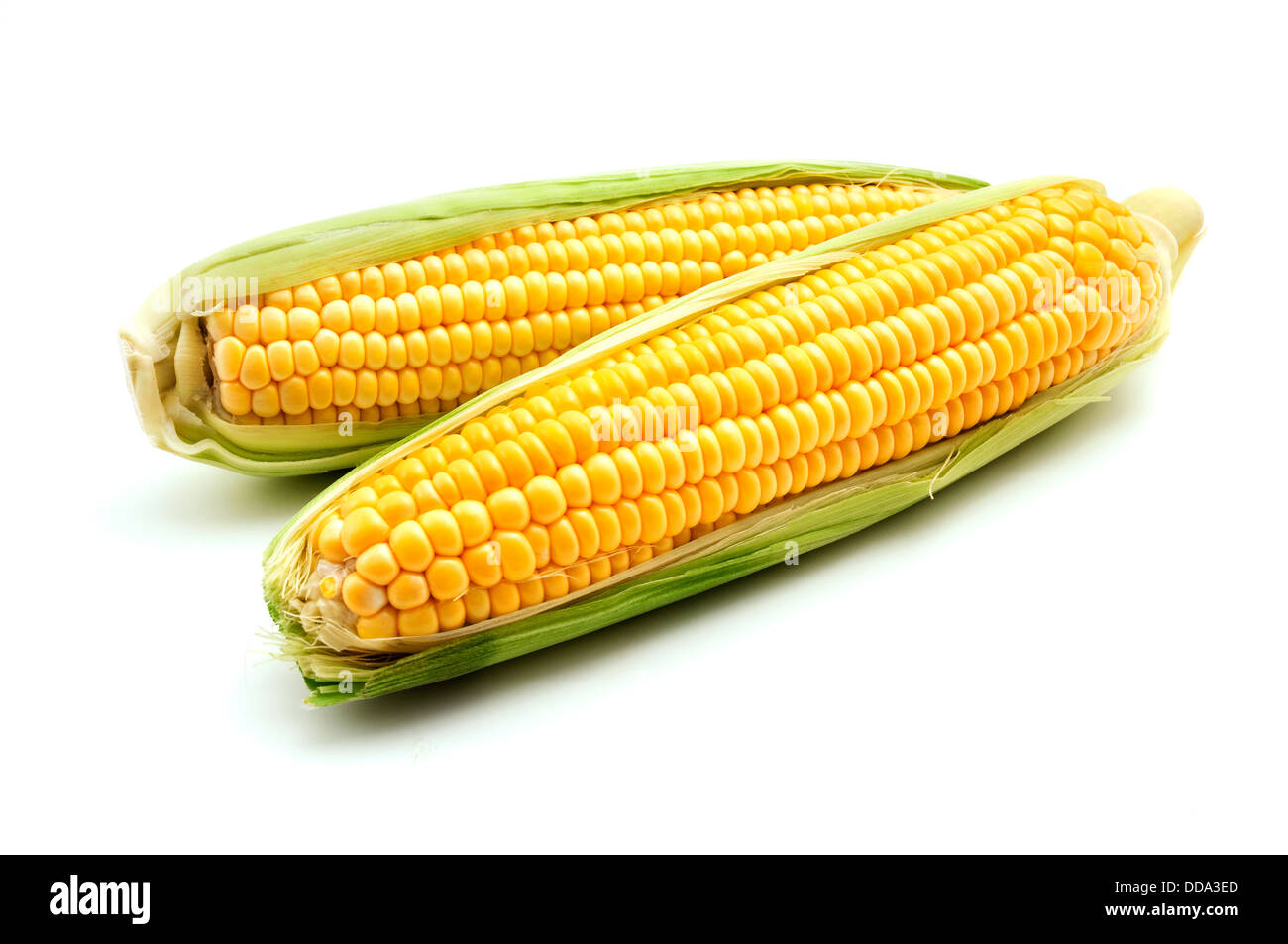Ears of maize on a white background - Stock Image
