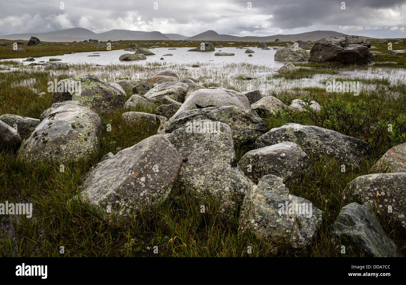Shallow lake and wet rocks at Valdresflye plateau Jotunheimen National Park Norway - Stock Image