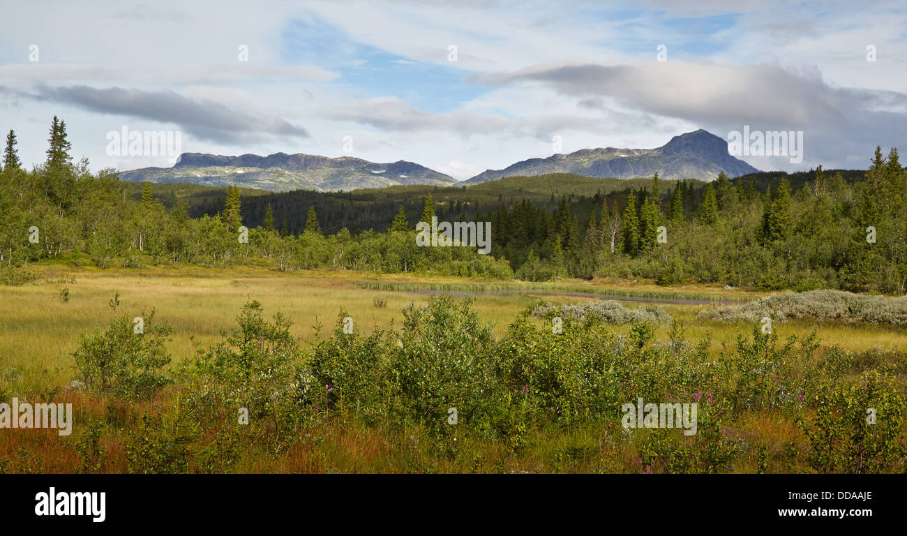 Bitihorn and Skyrifjellet mountains from near Beitostollen in the Jotunheimen National Park Norway - Stock Image