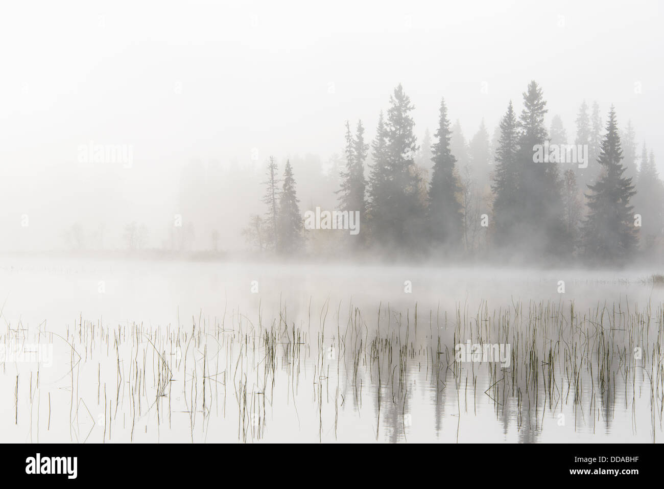 Misty lake and forest, Dalarna, Sweden - Stock Image