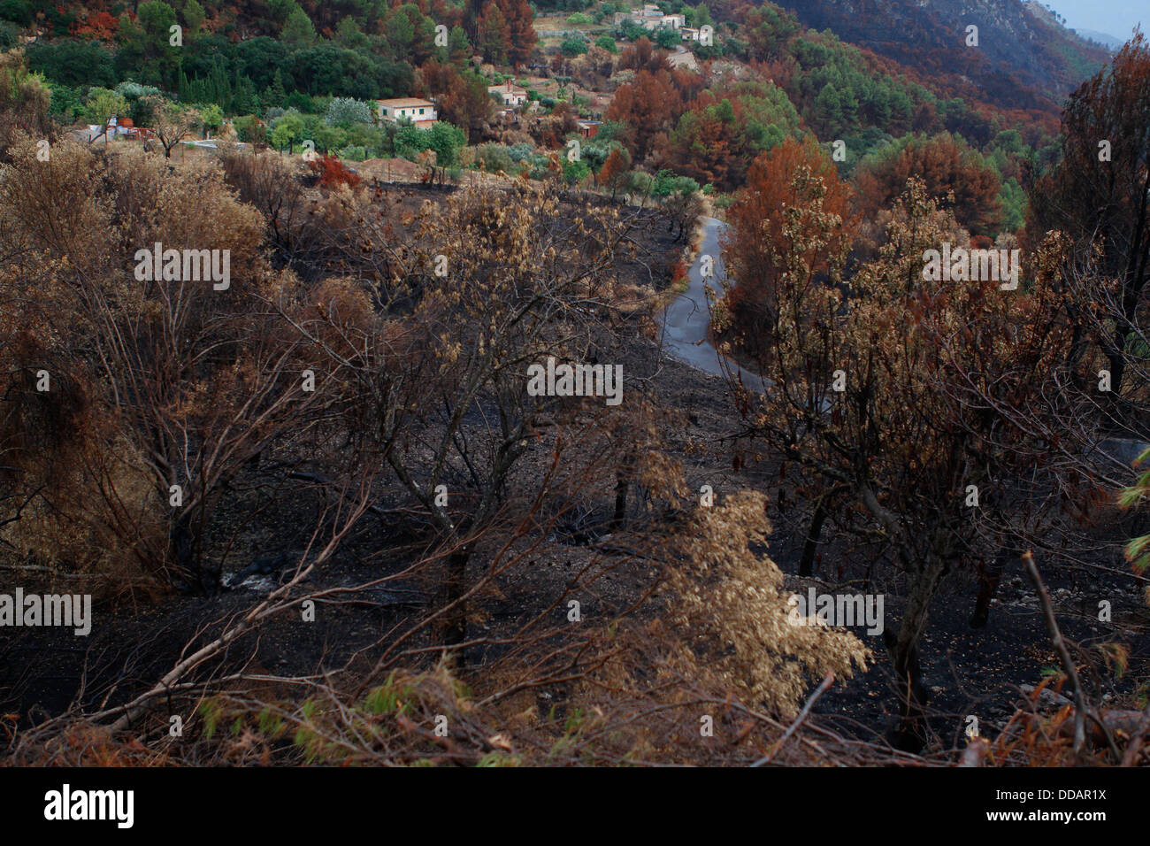 Burned area seen after a wildfire that razed more than 2300 hectares in the Spanish island of Mallorca. - Stock Image