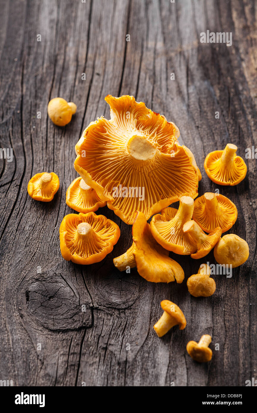 Raw chanterelles on wooden texture - Stock Image