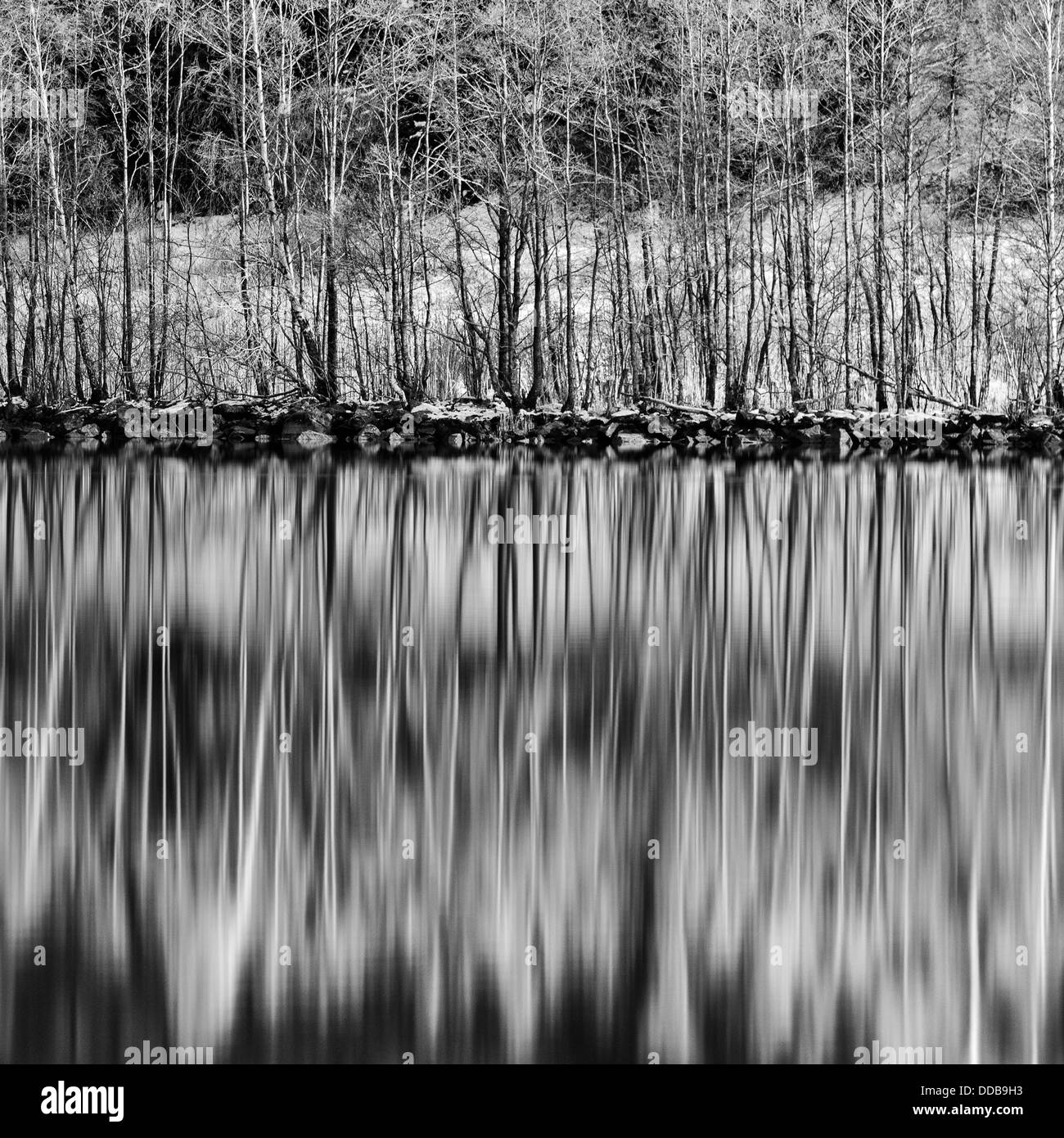 Trees reflected in water, Göta Älv, Sweden - Stock Image
