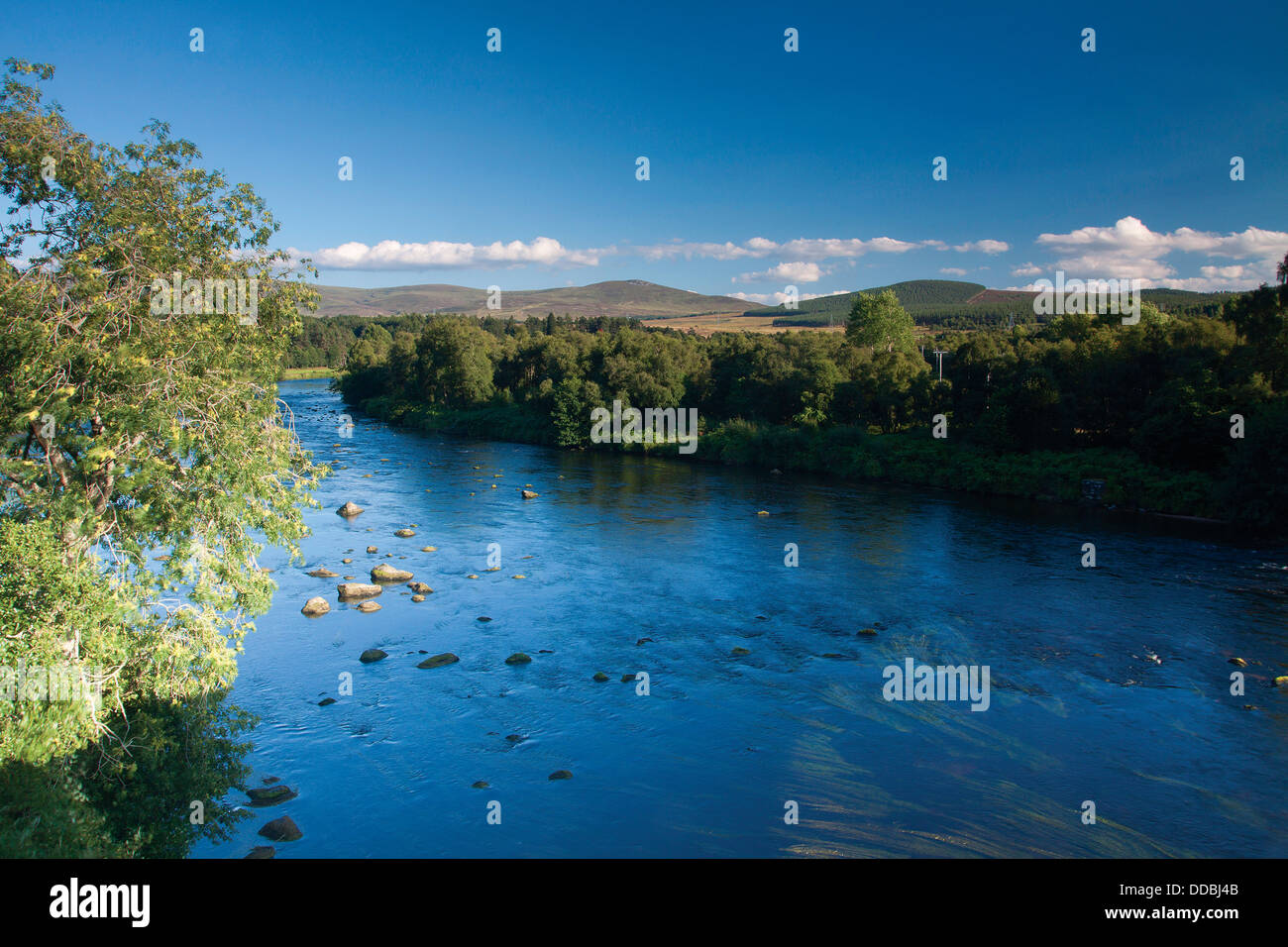 The River Spey near Grantown-on-Spey, Cairngorm National Park, Highland - Stock Image
