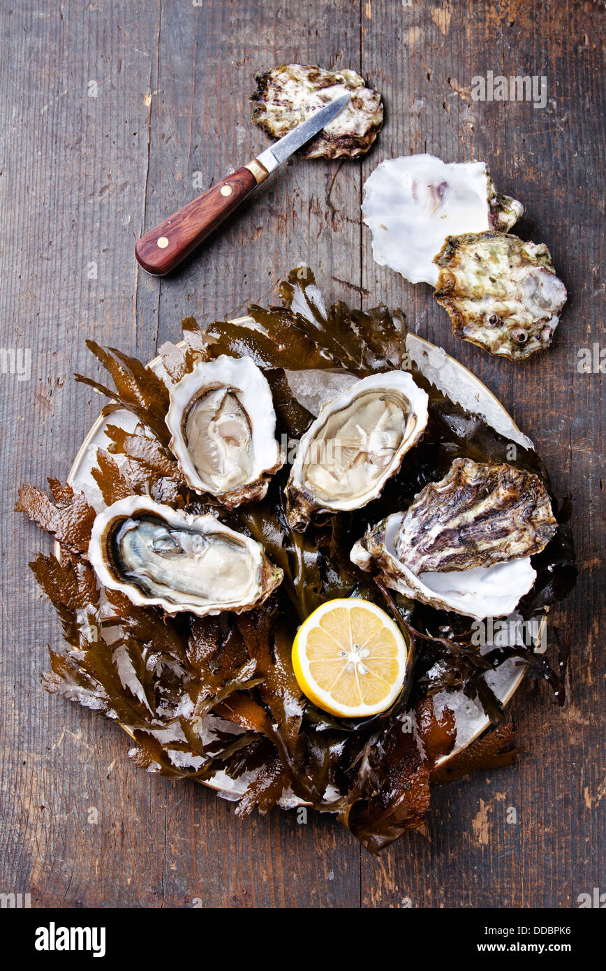 Open oyster Super Speciale with seaweed and ice on wooden background - Stock Image