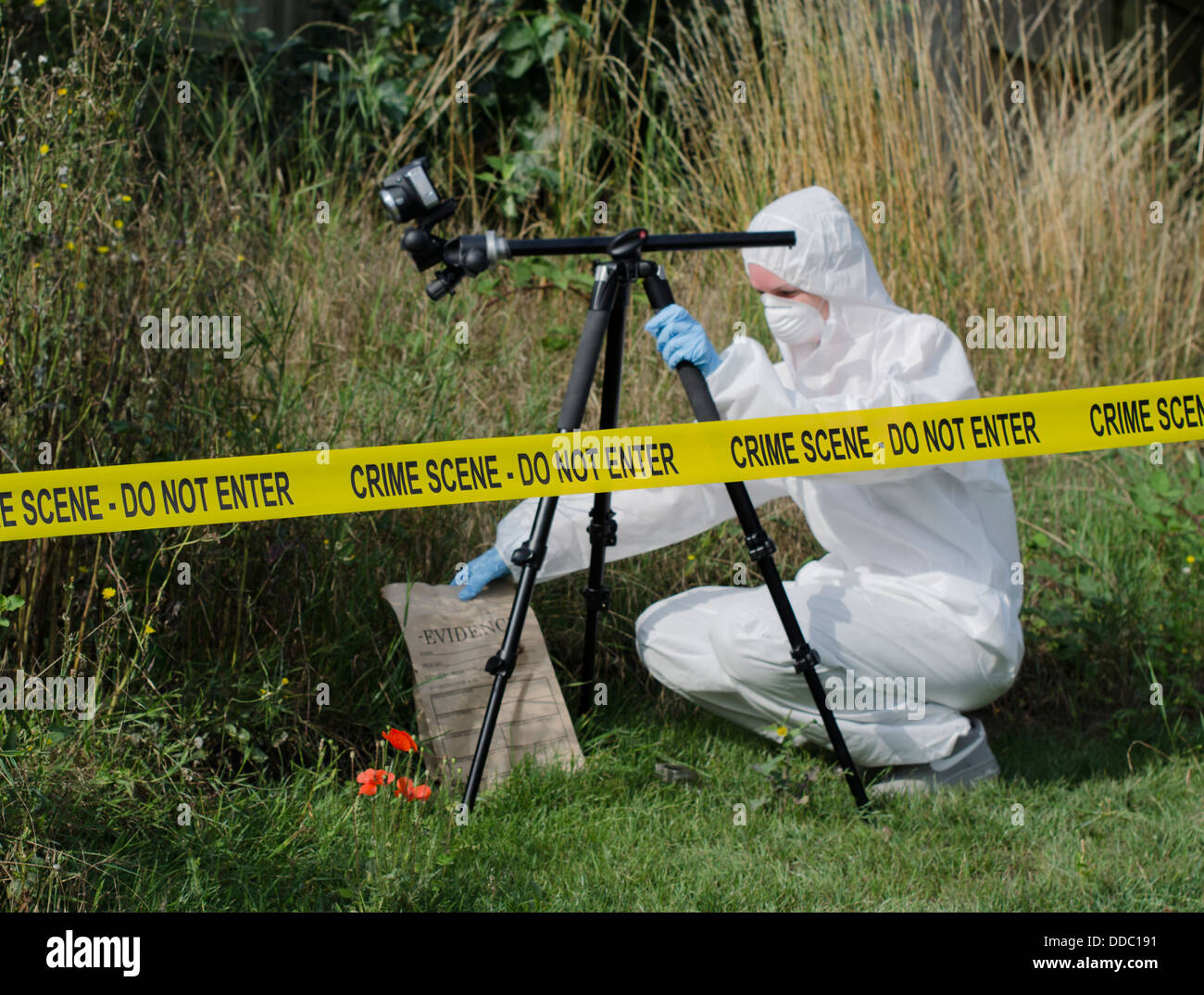 Forensic scientist checking for evidence behind a crime scene barrier - Stock Image
