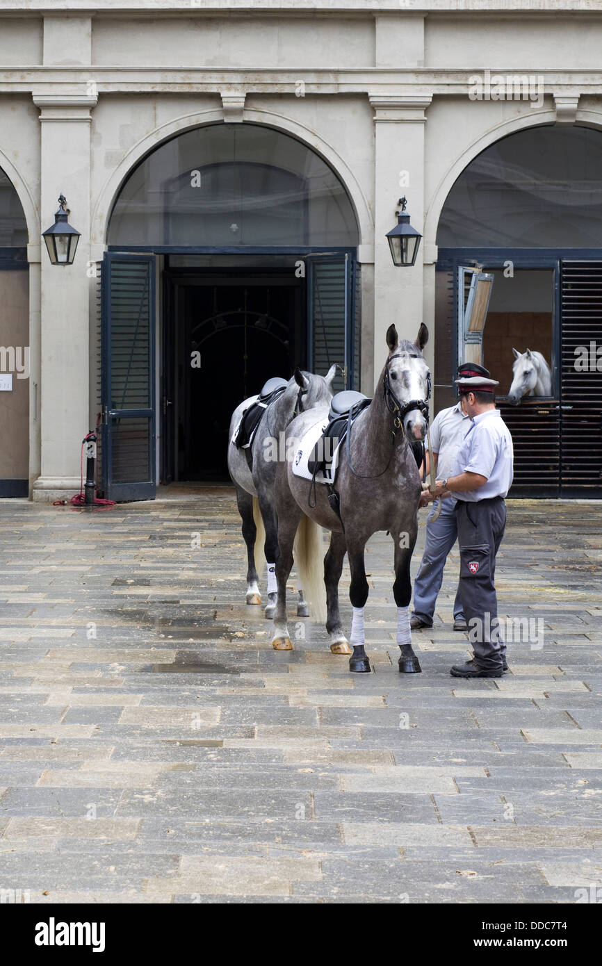Lipizzaner horses crossing the yard to begin  training at the Spanish Riding School in Vienna Stock Photo