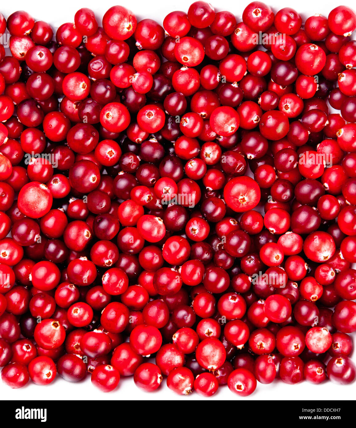 Red ripe cranberries background - Stock Image