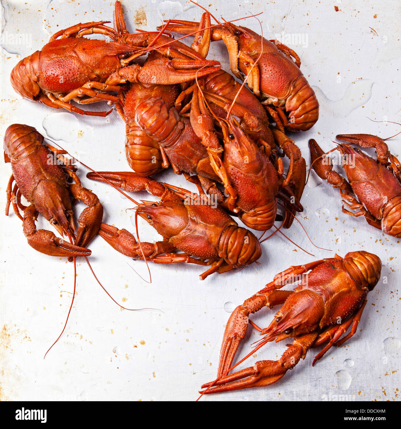 Boiled red lobsters on textured background - Stock Image