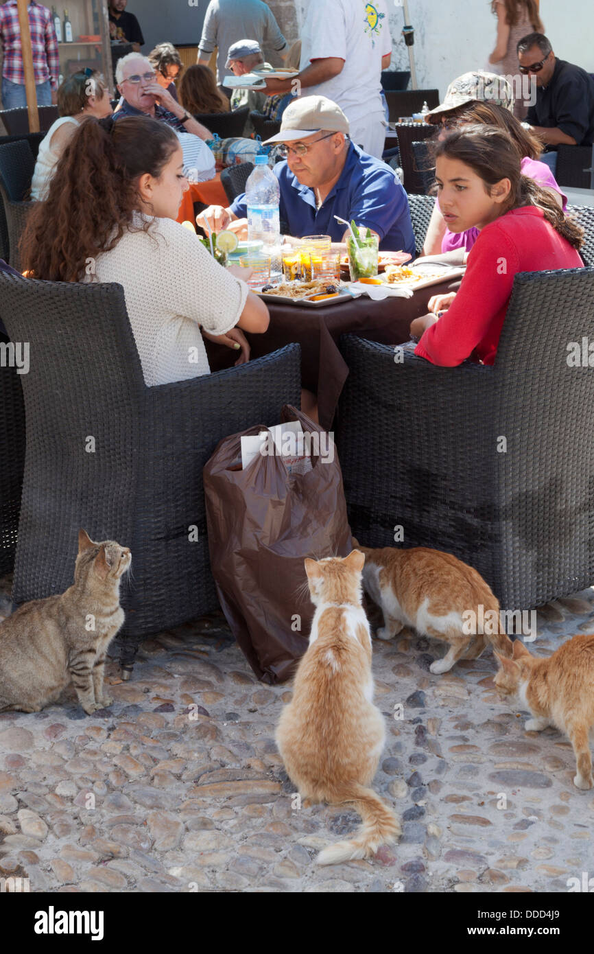 Cats begging at restaurant table, Essaouira, Morocco - Stock Image