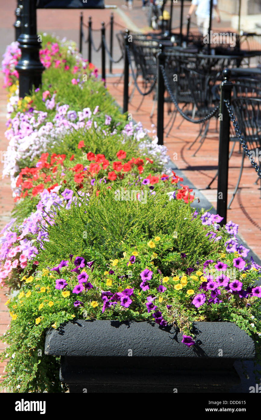 Long Black Planters With Colorful Flowers And Trailing Ivy, Standing Along  Sidewalk In Front Of Outdoor Restaurant Patio.