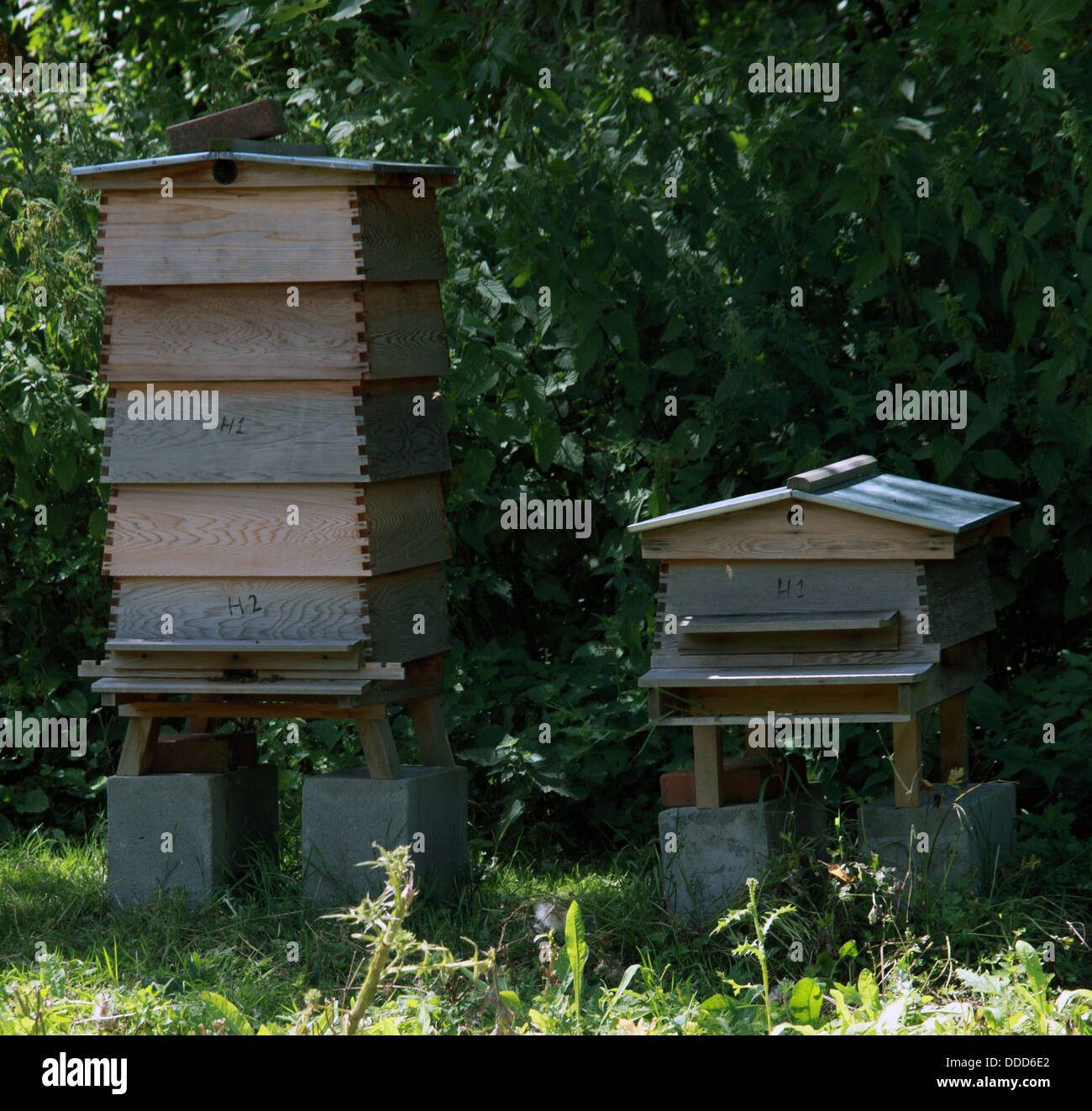 Bee Hives - Stock Image