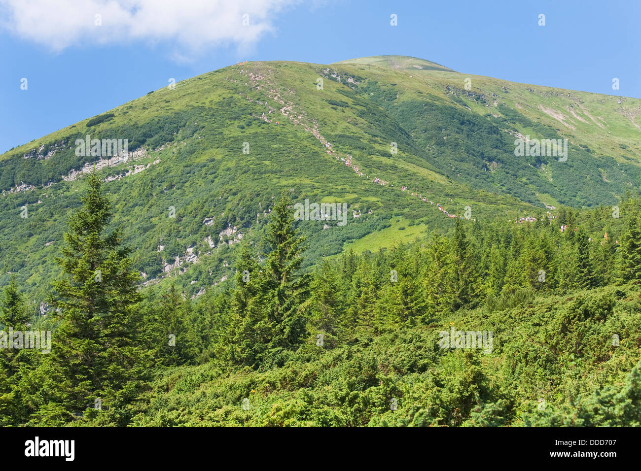 Summer mountain view with conifer forest - Stock Image