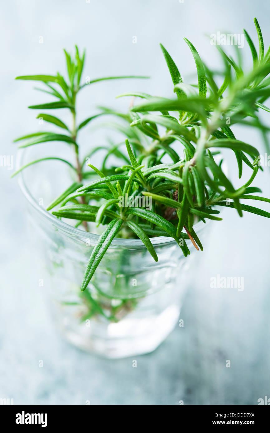 fresh rosemary - Stock Image