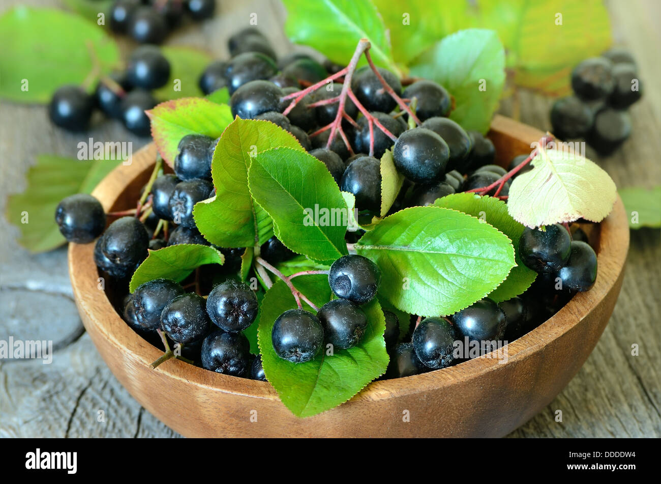 Black chokeberry in brown bowl on wooden table - Stock Image
