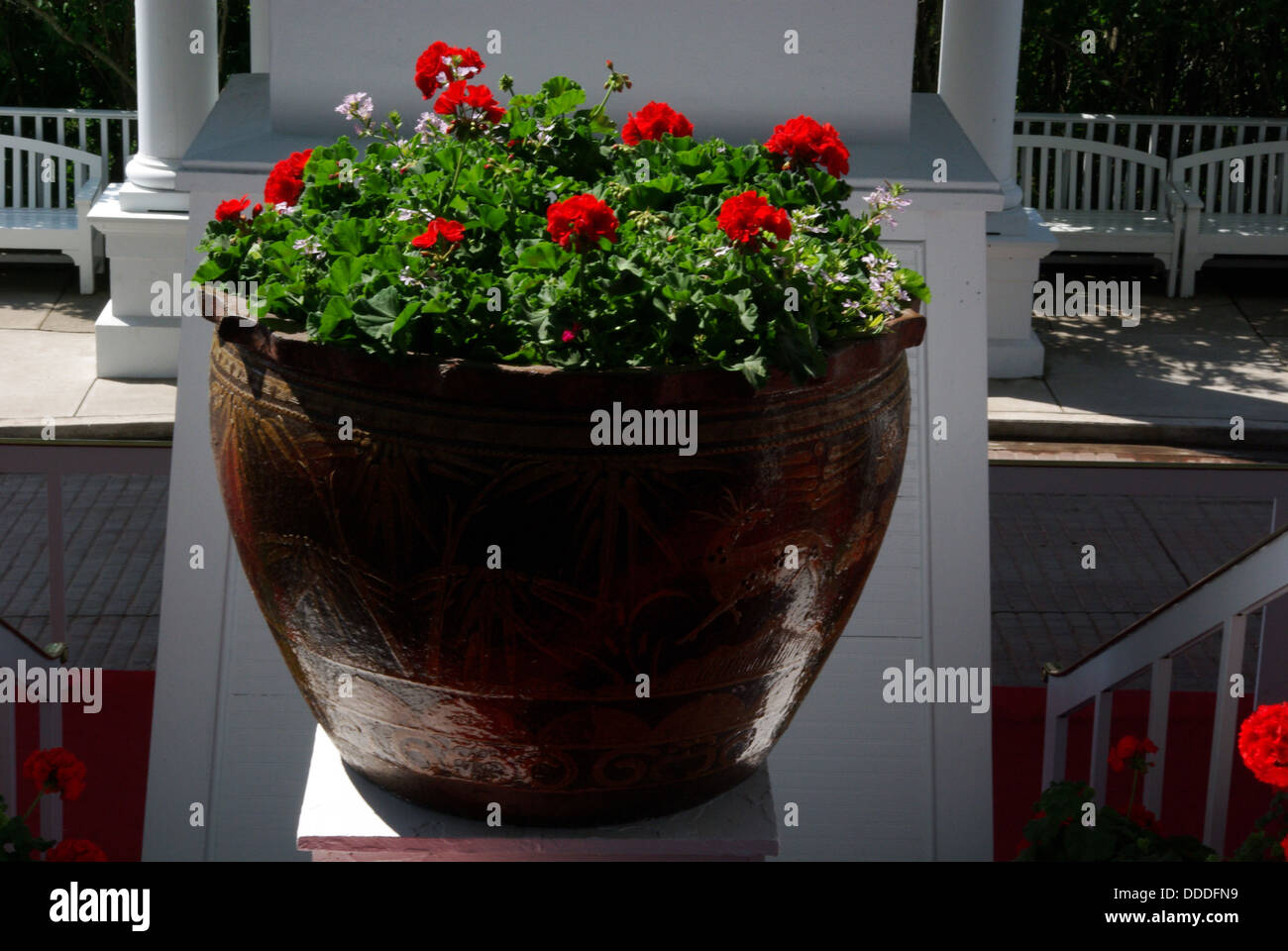 Red flowers in a brown stoneware plant pot - Stock Image