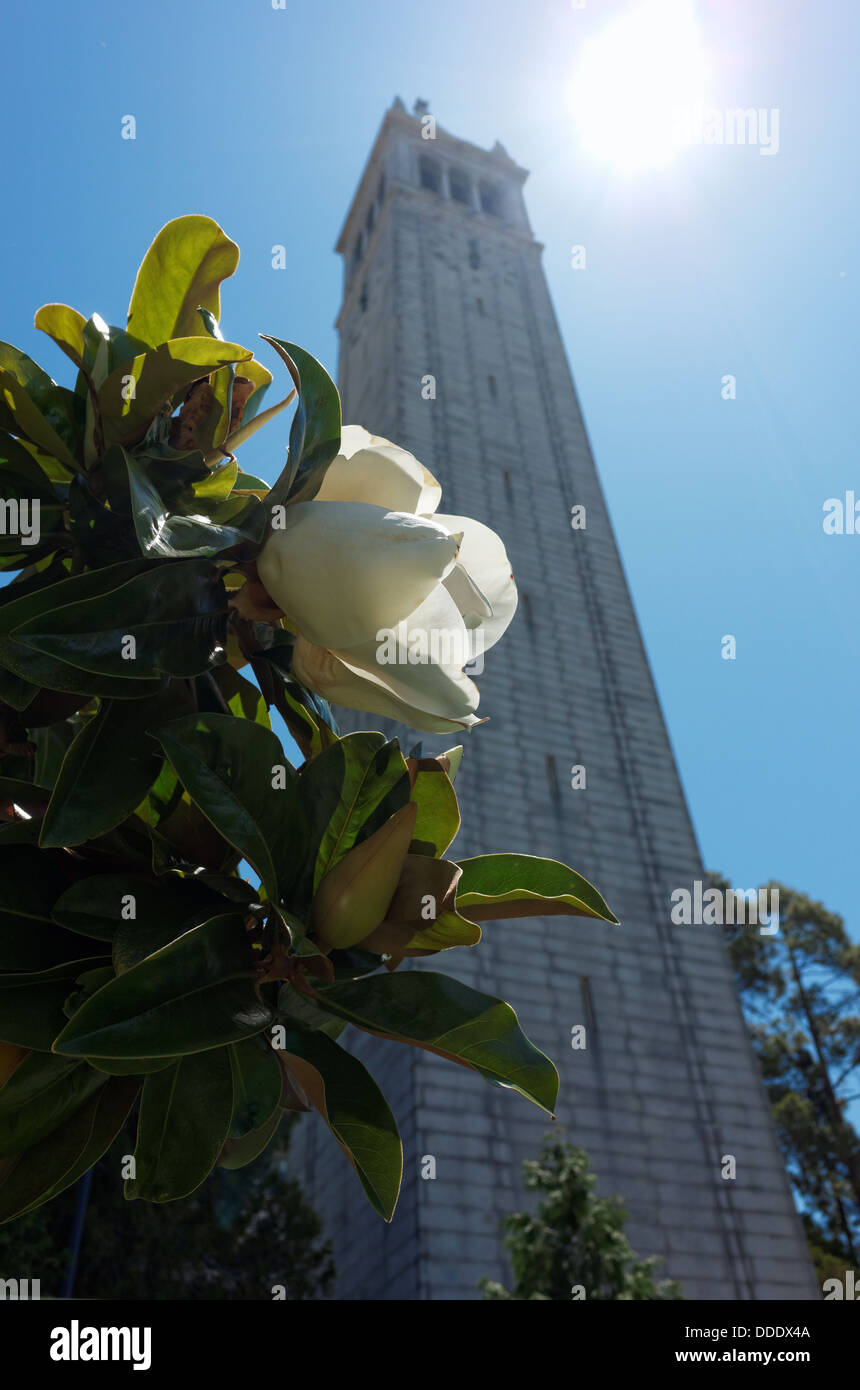 University of California, Berkeley, Campanile - Stock Image