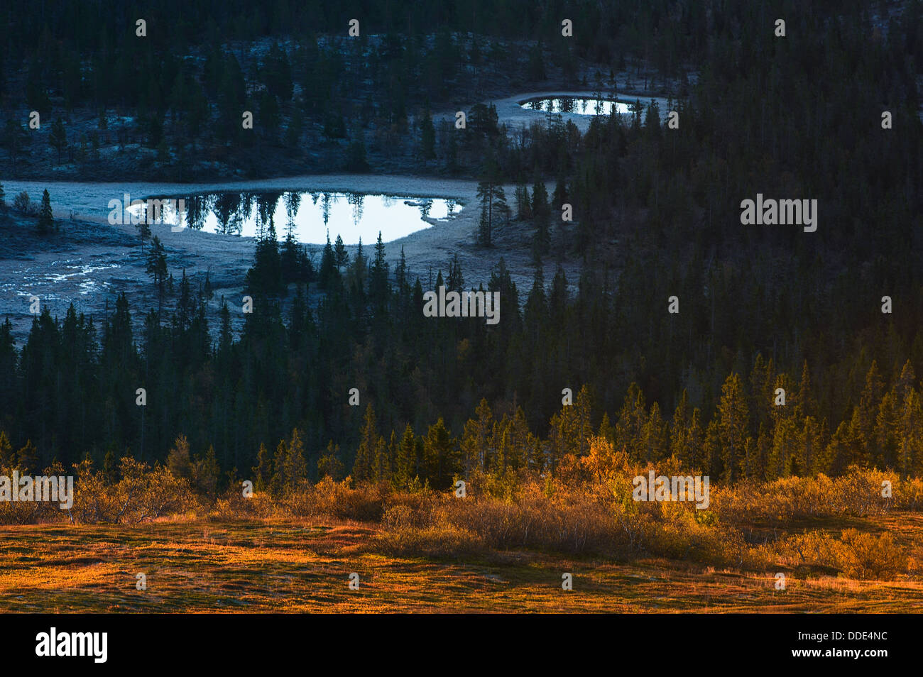 Forests and lake, Nipfjället, Dalarna, Sweden - Stock Image
