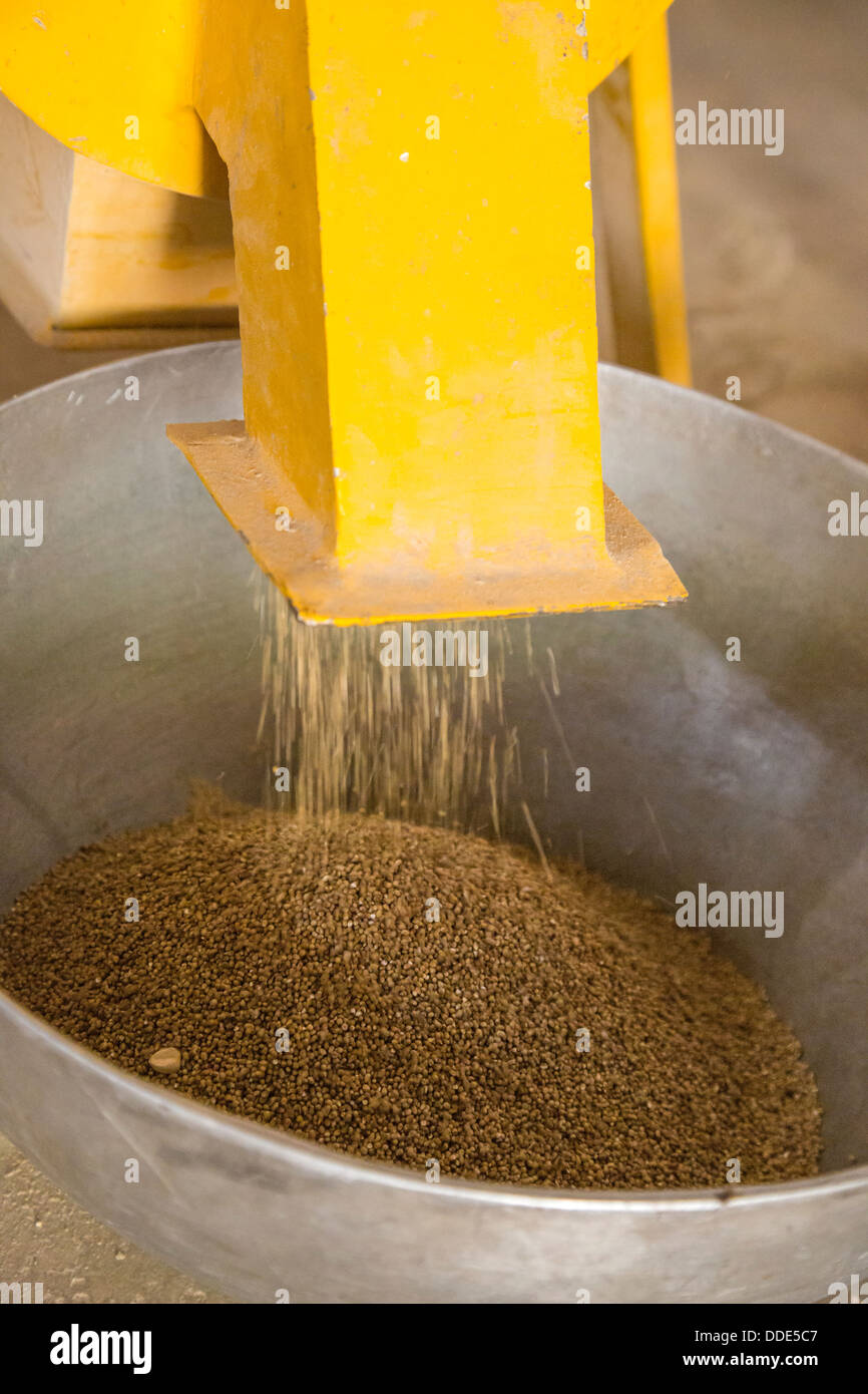 Collecting Maize Flour at Kaymor Village Maize Grinding Facility, Senegal. An Africare Project. - Stock Image