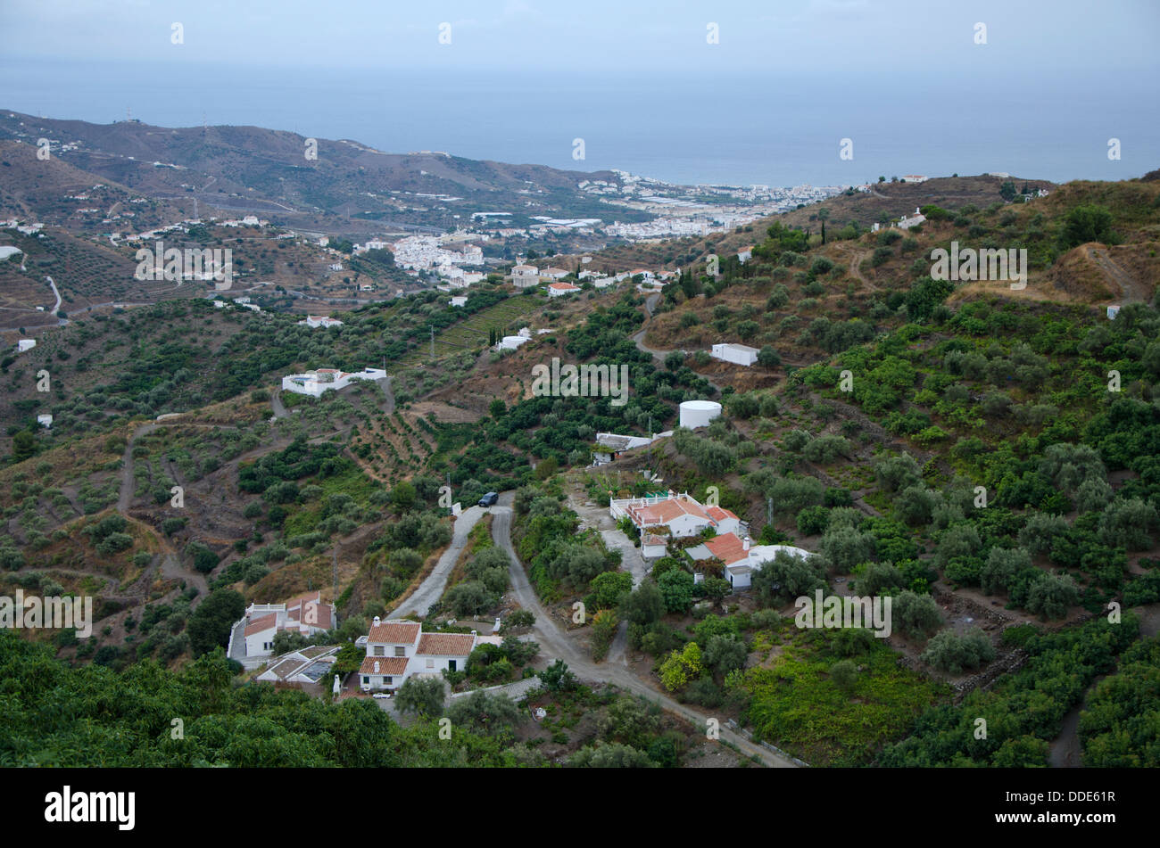 Spanish farmland in countryside with fruit trees inland from Torrox, andalusia, Spain. - Stock Image