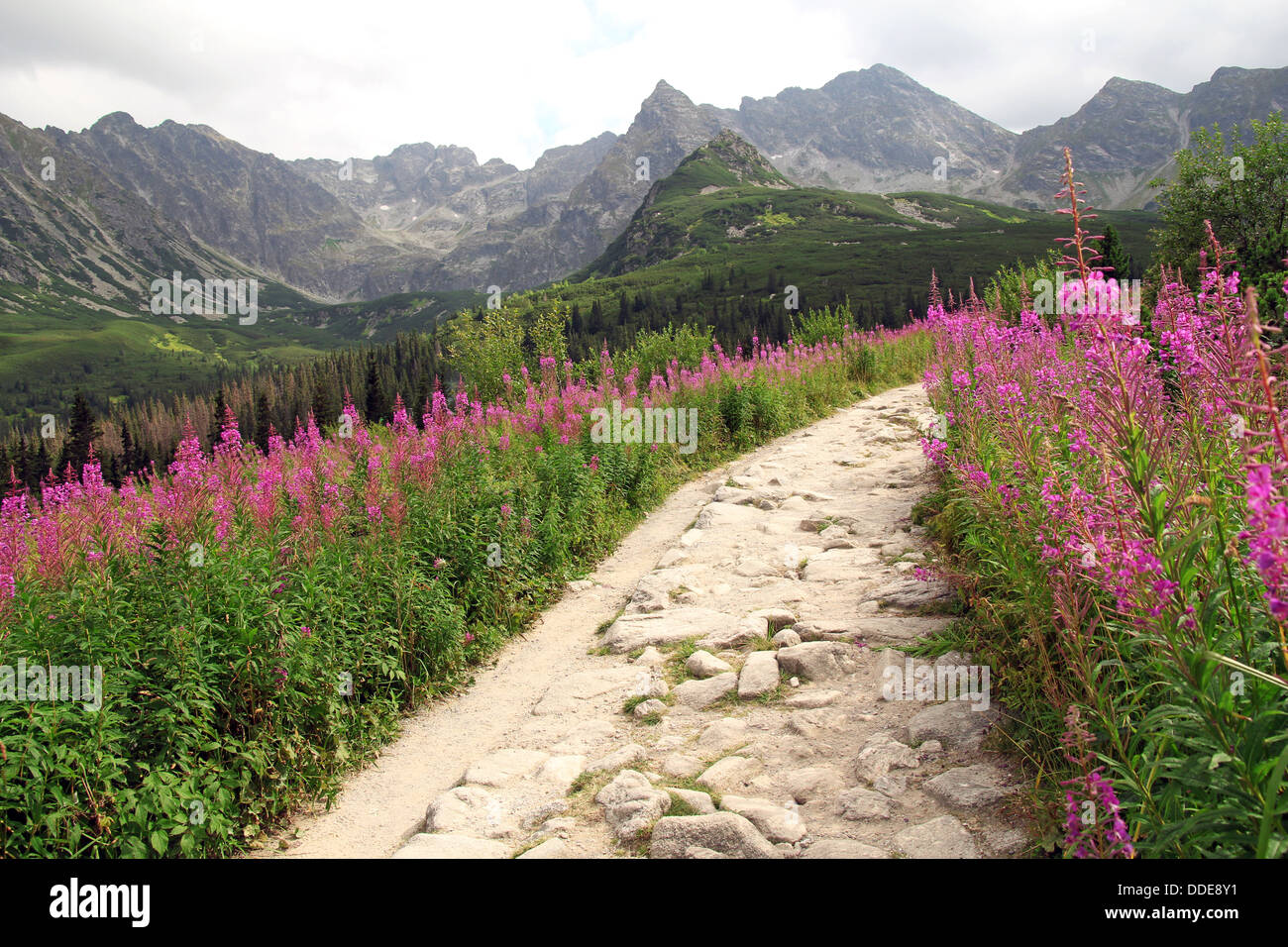 hiking path in Tatra Mountains Stock Photo